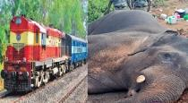 The train collided with the elephant